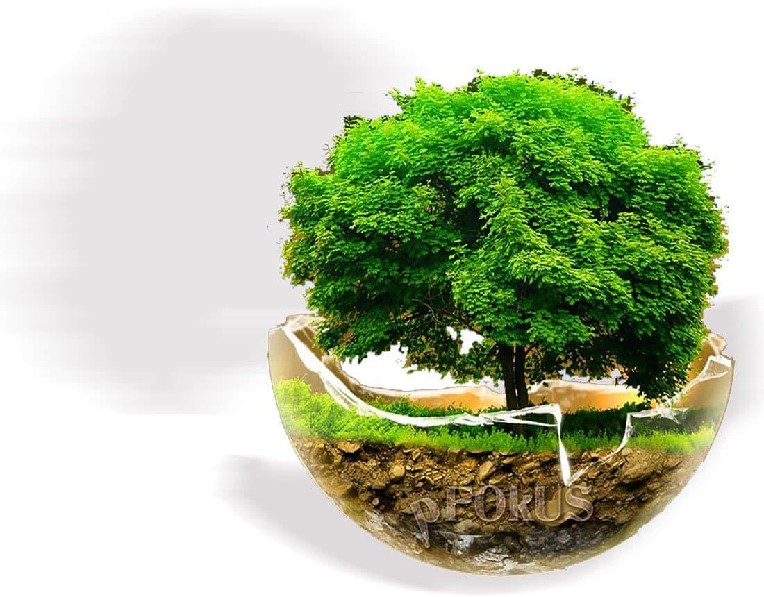 Creating a Green Environment