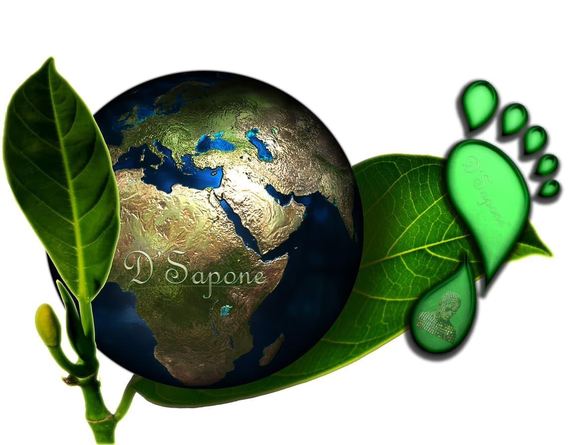 Environmental sustainability Social Responsibility statement D'Sapone